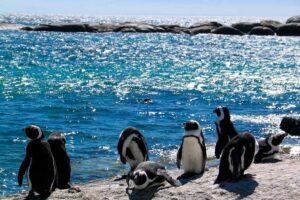 Pinguinos-Phillip-Island